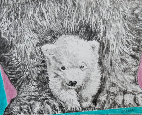 Polar bears pencil on paper artwork by Stella Tooth
