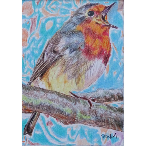 Robin pencil drawing on paper artwork by Stella Tooth