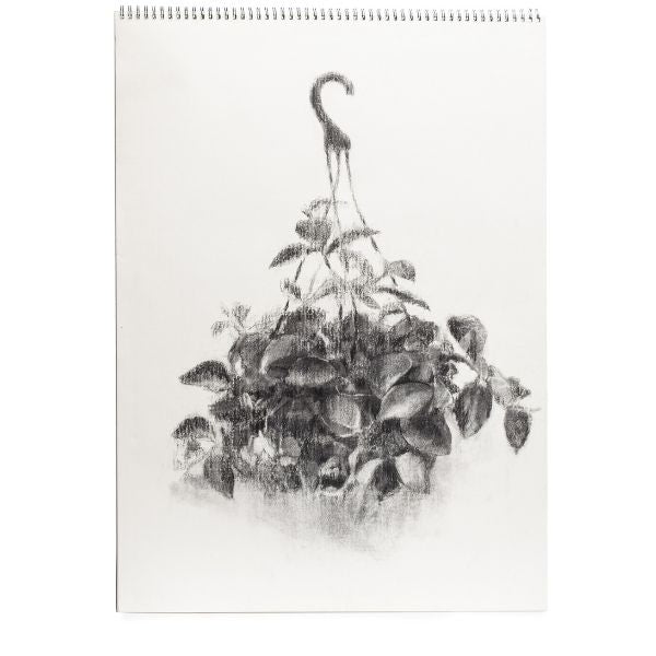 Plant on Plastic Hanger By Yoni Zohar