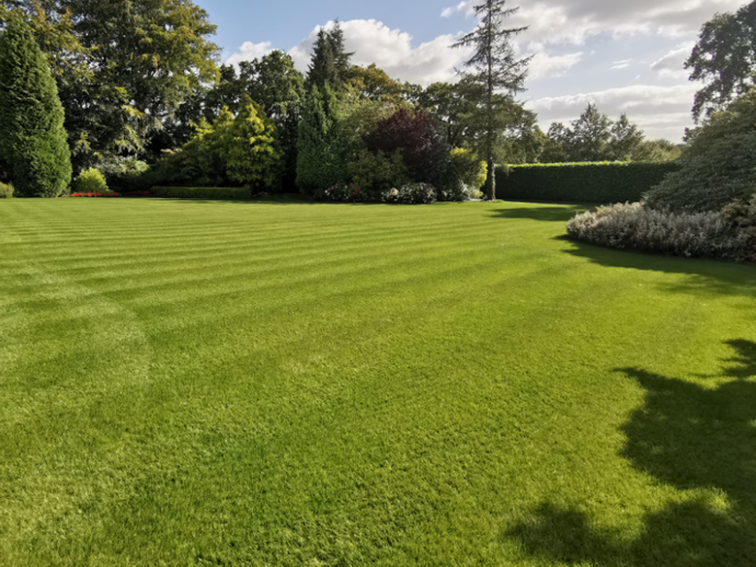 Mowing tips for an established lawn