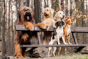 Mixed Breed Mystery Solved Thanks to Dog DNA Tests