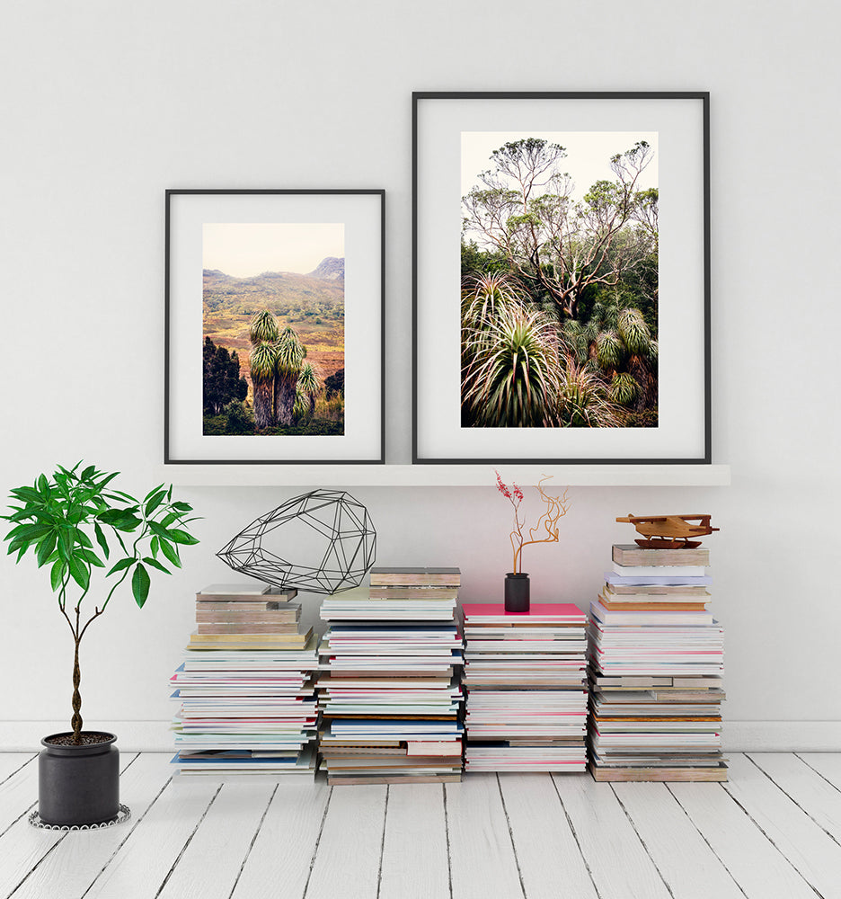 a fine art print of a beautiful gnarly snow gum surrounded by pandani plants in the wilderness of Cradle Mountain Tasmania