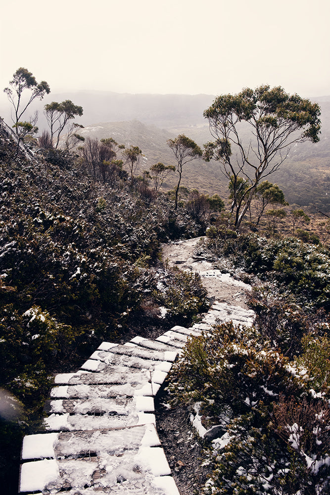 Cradle Mountain prints featuring the beauty of the Tasmanian wilderness of Cradle Mountain National Park, this print shows a snowy trail leading down a mountain surrounded by snow capped bushland by photographer Millie Brown