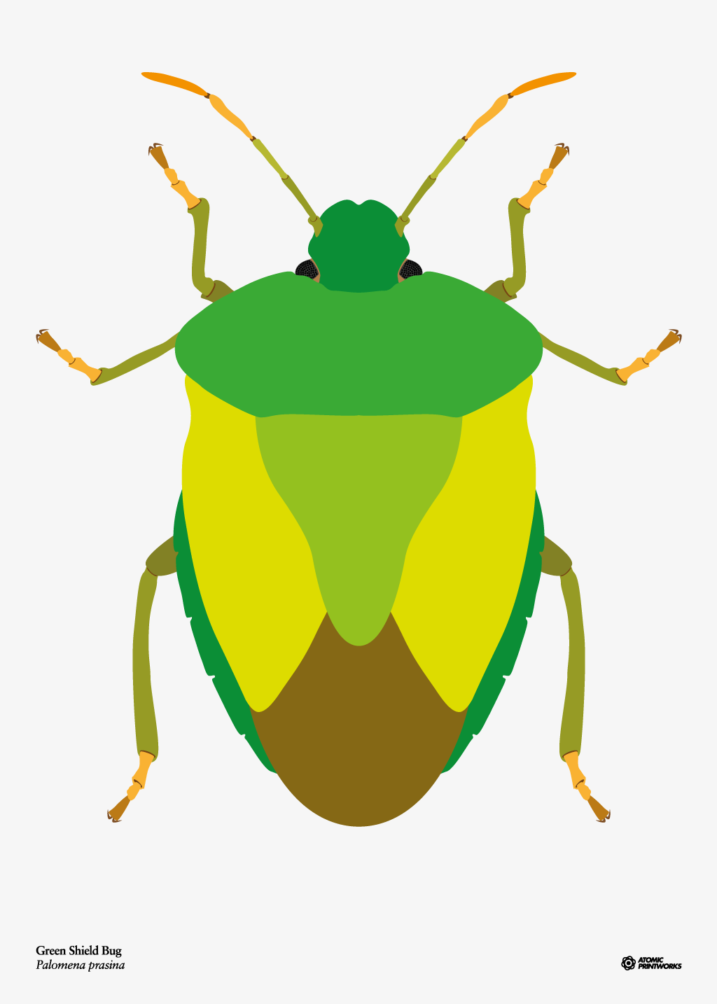 Green Shield Bug print