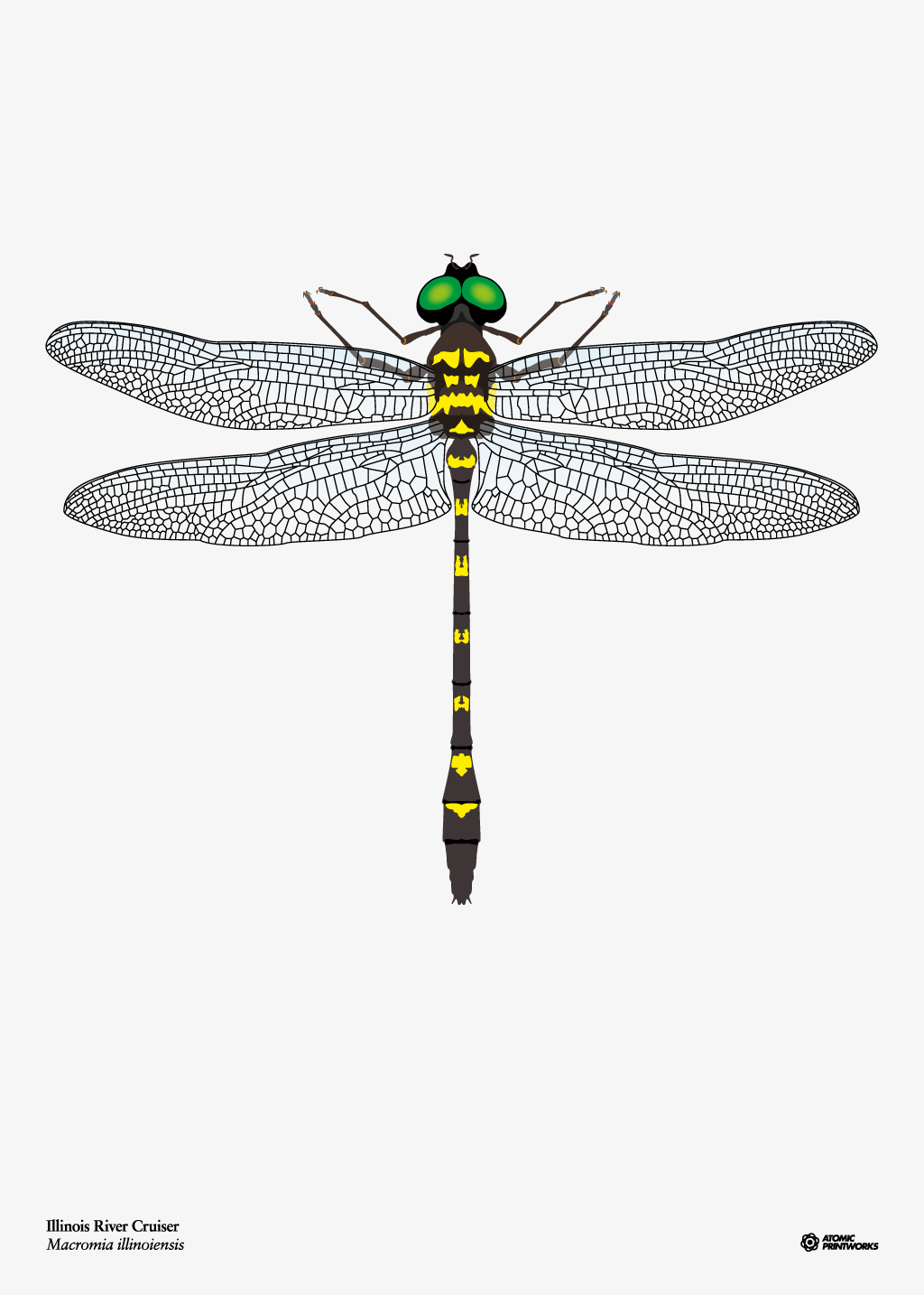 Illinois River Cruiser dragonfly print