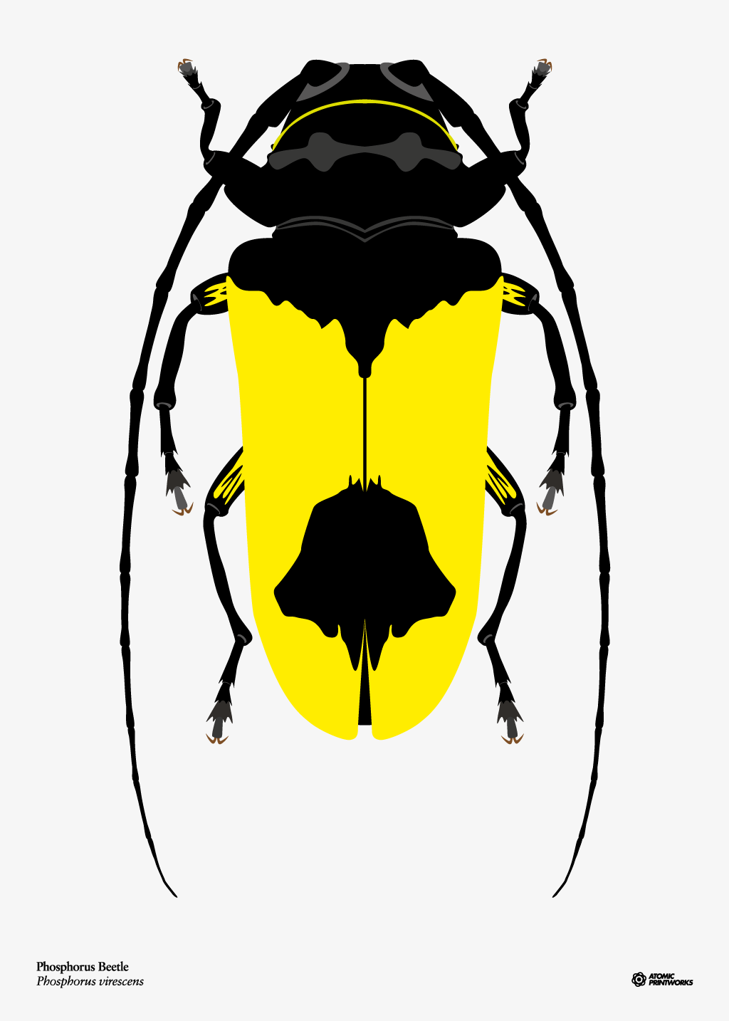 Phosphorus beetle print