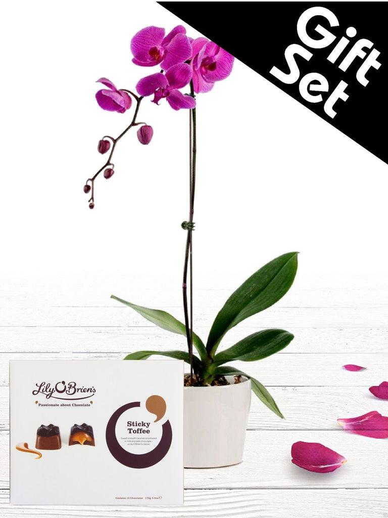 Purple Orchid Plant and Chocolates