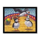 A Circus Of Puffins Framed Print