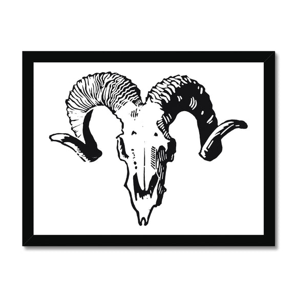 Sheep's Skull Framed Print