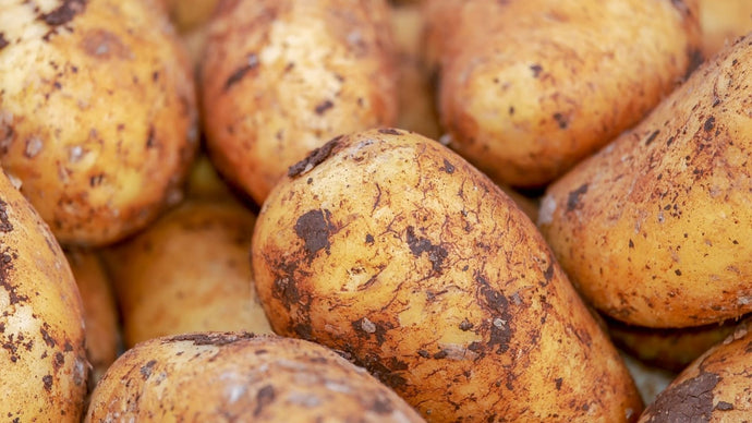 Did you know simple potato salad can help your gut health?