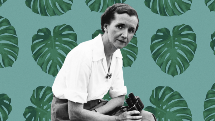 Heroes of the Food World - Rachel Carson Remembered
