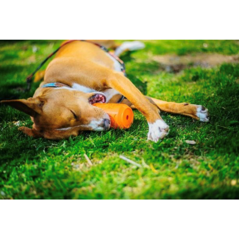 SP Can Toy Durable Rubber Chew Toy & Treat Dispenser - Orange Squeeze - Thorito's Closet