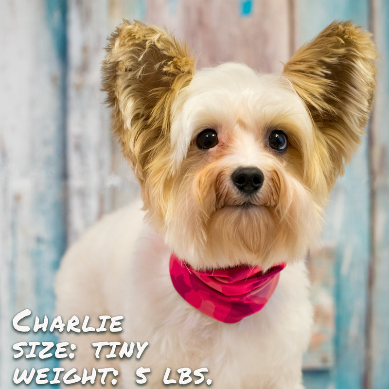 Crazy About Pink Pup Scruff - Thorito's Closet