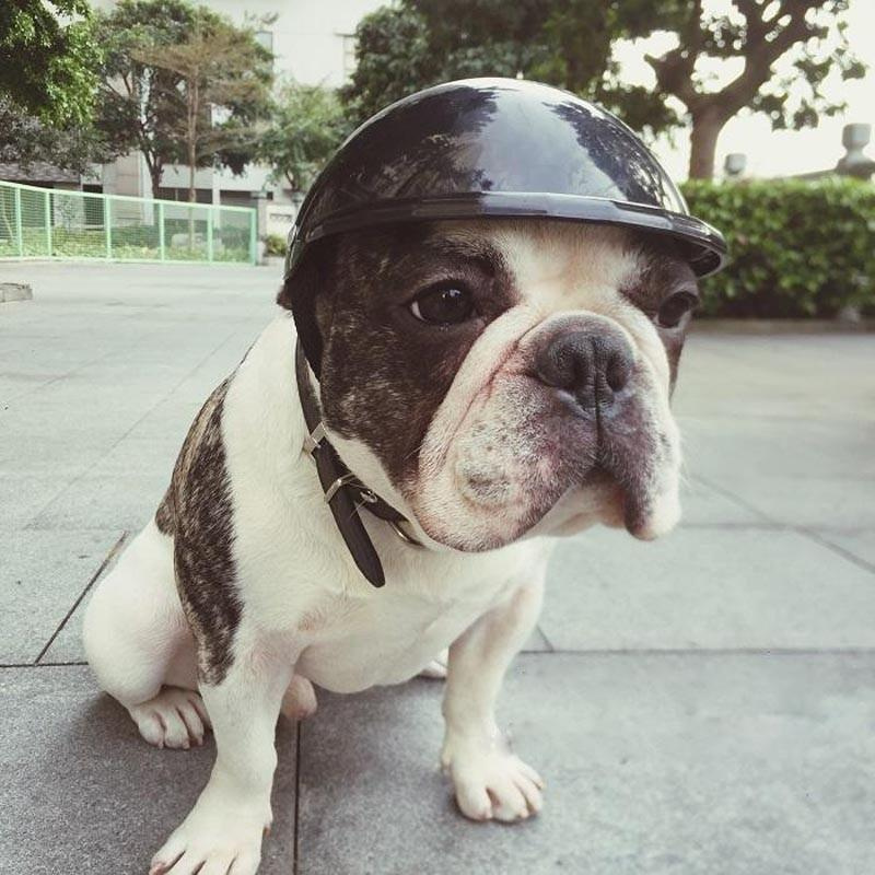 Biker Safety Helmets Hats Caps ABS for Pets - Thorito's Closet