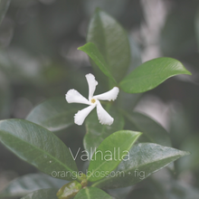 Load image into Gallery viewer, Valhalla : orange blossom + fig