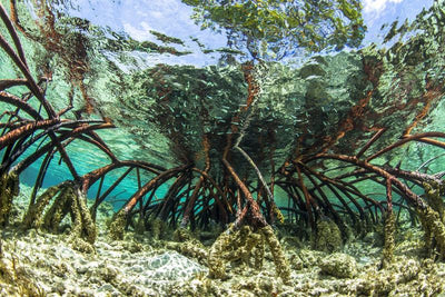 Protecting Critical Coastal Ecosystems