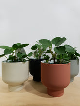 Load image into Gallery viewer, Fergus Ceramic Planter Natural Linen