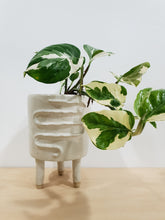 Load image into Gallery viewer, Snake Planter +  Legs