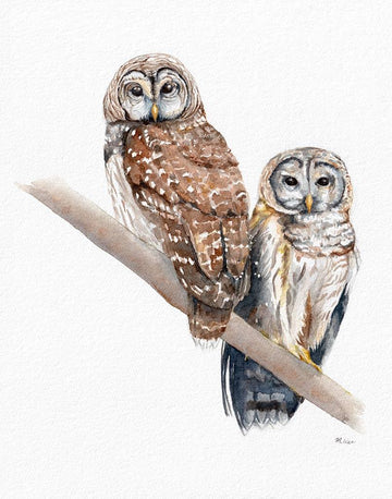 Two Barred Owls