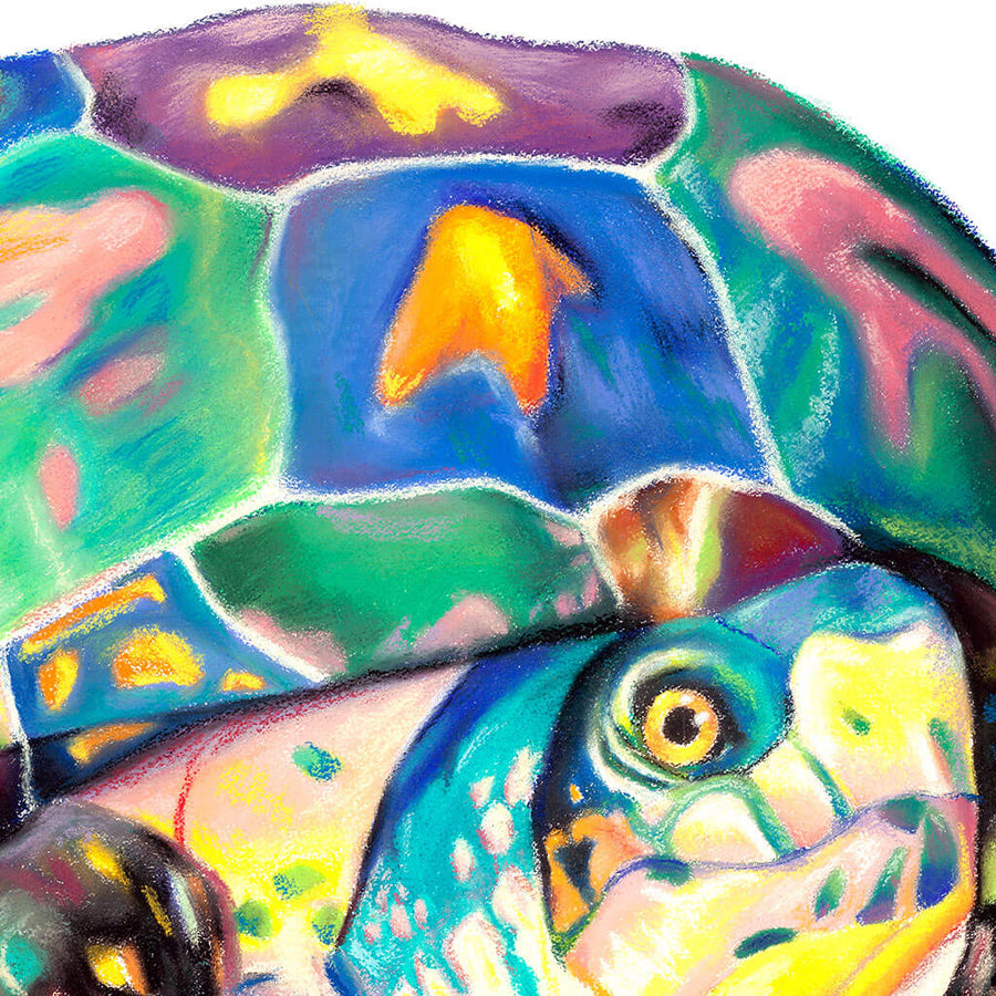 Close up shot of colorful turtle pastel drawing