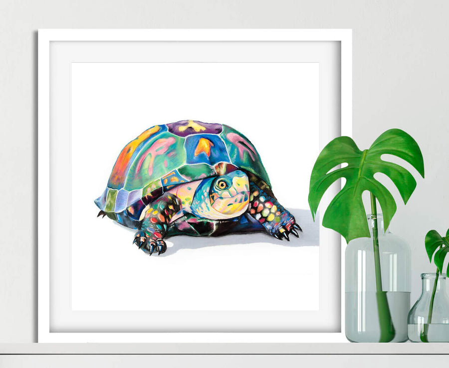 Multicolored box turtle drawn in pastel in white frame