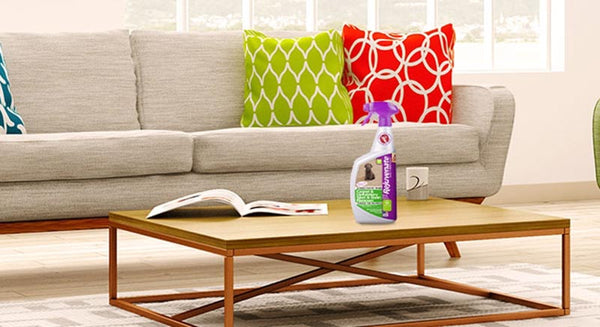 Your Couch A Makeover With The Right Upholstery Cleaner