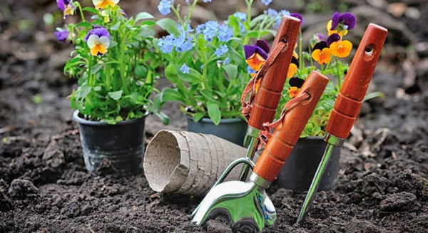 Popular Home Gardening Tips For Beginners