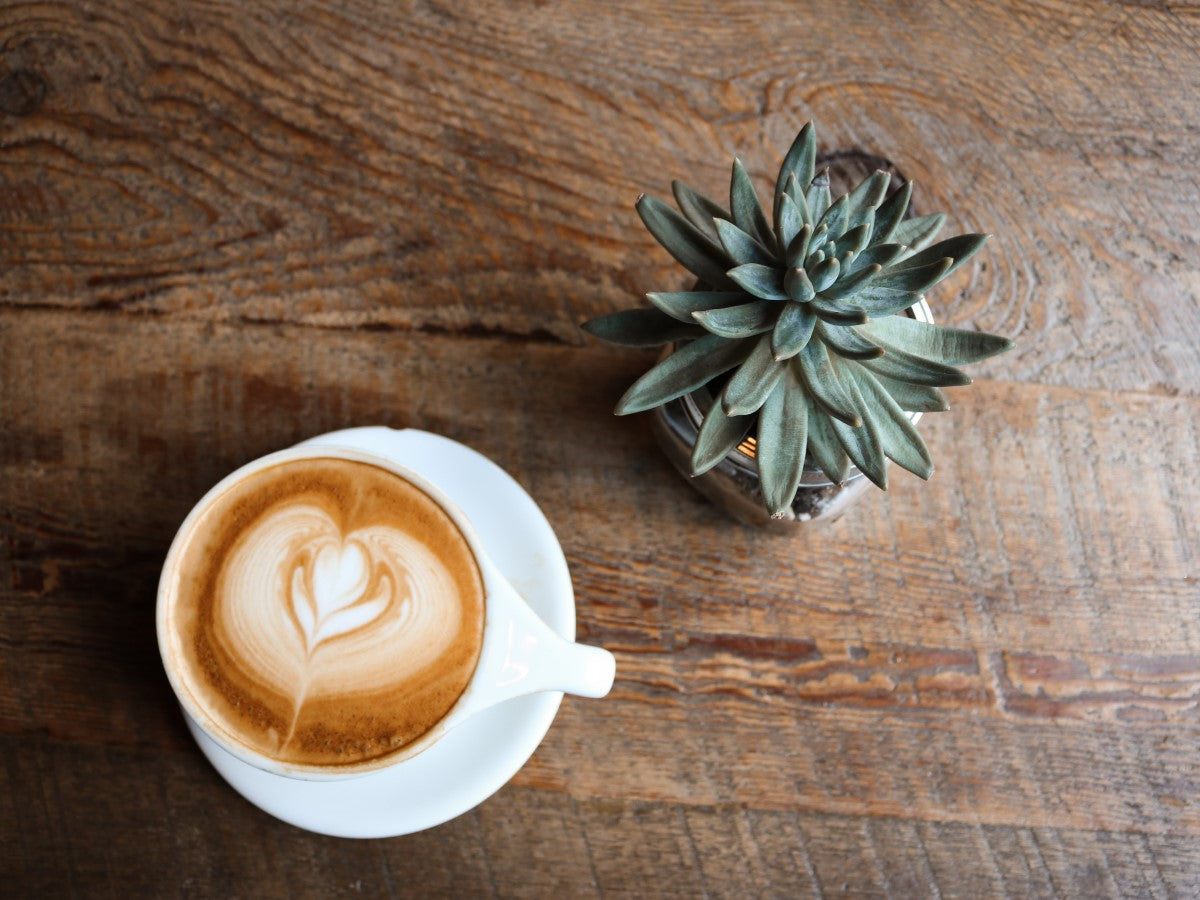 Organic Latte In White Cup And Saucer With Succulent Plant On Natural Wood Table