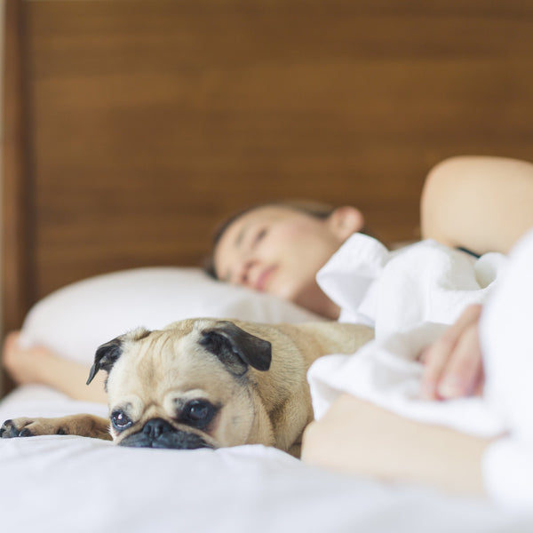women sleeps deeply with her puppy after she had a Tearapy ResTea tea