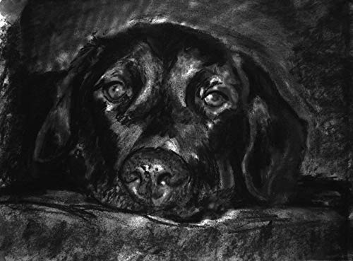 Labrador Wall Art Decor, Black Labrador Charcoal Drawing Wall Art Print, Lab Owner Gift, Retriever Dog Art, Dog Memorial Decor Choice Of Sizes Hand Signed By Oscar Jetson - Dog portraits by Oscar Jetson