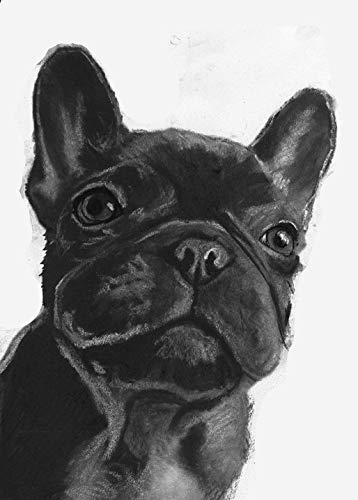 Black French Bulldog Wall Art Decor, Frenchie Puppy Owner Gift, Frenchy Memorial Art, Dog Mom Decor Choice Of Sizes Hand Signed By Dog Portrait Artist Oscar Jetson - Dog portraits by Oscar Jetson