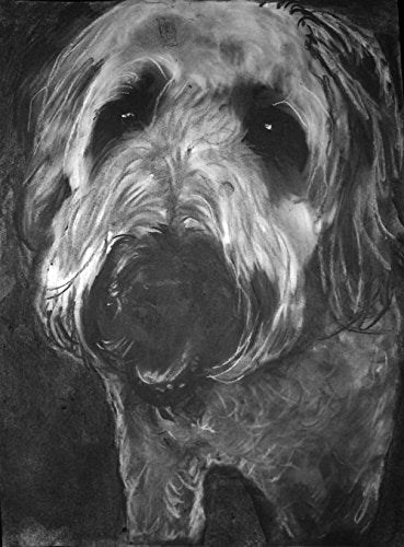 Wheaten Terrier Wall Art, Wheaten Terrier Charcoal Drawing Print, Dog Nursery art, Wheaten Terrier Owner Gift, Dog Wall Art Print, Black and White Wheaten Terrier Mom Decor Hand Signed by Oscar Jetson - Dog portraits by Oscar Jetson