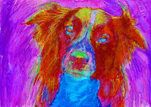 Border Collie Wall Art Decor, Collie Dog Art Print, Colorful Abstract Collie Dog Gift, Collie Owner, Collie Dog Art, Border Collie Wall Art Print, Dog Painting Print Hand signed by Oscar Jetson - Dog portraits by Oscar Jetson