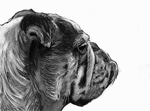 English Bulldog Drawing Wall Art Print, Dog Gift, English Bulldog Memorial, Black and White Drawing Decor, Hand Signed By Oscar Jetson Choice Of Sizes - Dog portraits by Oscar Jetson