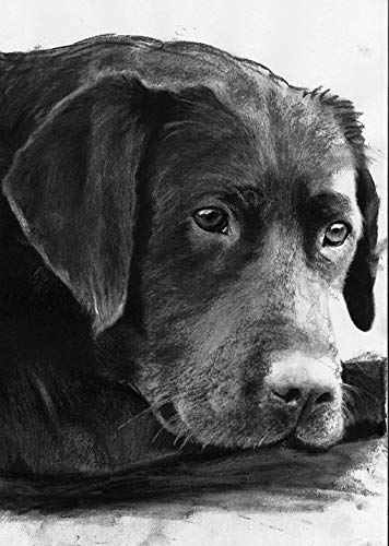 Labrador Wall Art Print, Black Lab Art, Lab Retriever Owner Gift, Black Dog Decor, Charcoal Dog Artwork Choice Of Sizes Hand Signed By Pet Portrait Artist Oscar Jetson - Dog portraits by Oscar Jetson