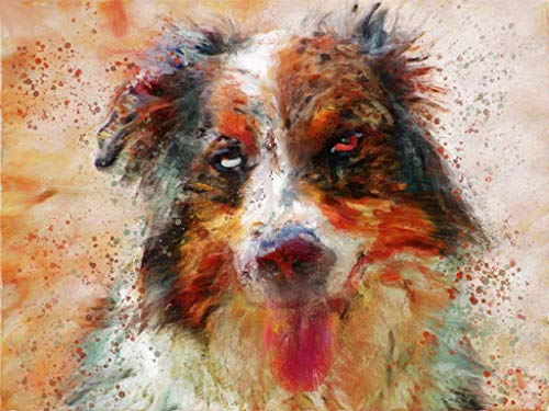 Australian Shepherd Dog Wall Art Decor, Dog Memorial, Abstract Dog Picture Gift Choice of Sizes Hand Signed by Dog Portrait Artist Oscar Jetson. - Dog portraits by Oscar Jetson