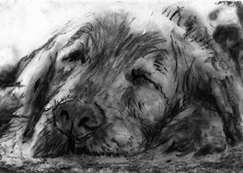 Black and White Charcoal Drawing, Sleeping Golden Retriever Owner Gift, Goldie Mom, Golden Retriever Art Decor, Relaxing Golden Retriever Wall Art Print, Dog Decor signed by Oscar Jetson - Dog portraits by Oscar Jetson
