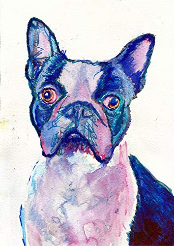 Boston Terrier Wall Art Print, Colorful Nursery Art, Boston Terrier Owner Gift, Colorful Dog Memorial Painting Decor Hand Signed By Pet Portrait Artist Oscar Jetson Choice Of Sizes 8x10, 11x14, 12x16 - Dog portraits by Oscar Jetson