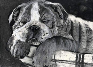English Bulldog Puppy Wall Art, Dog Mom Gift, Bulldog Owner Gift, English Bulldog Memorial, Black and White Bulldog Drawing Decor Hand Signed By Oscar Jetsin Choice Of Sizes - Dog portraits by Oscar Jetson