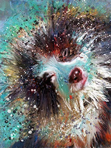 Border Collie Wall Art Print, Abstract Splashing Collie Dog Decor, Dog Gift, Collie Mom Picture, Choice of Sizes Hand Signed by Dog Portrait Artist Oscar Jetson. - Dog portraits by Oscar Jetson
