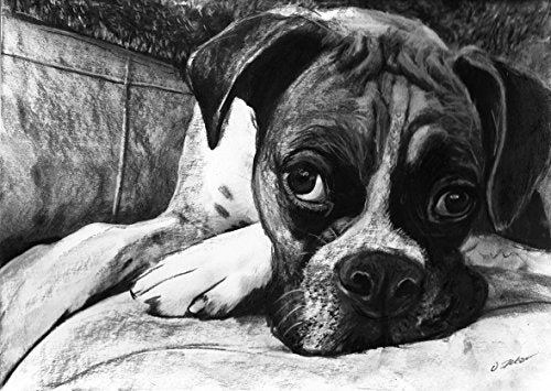 Boxer Dog Art, Boxer Dog Gift, Boxer Dog Artwork, Charcoal Dog Wall Art Print, Black and White Boxer Dog Drawing Decor Hand Signed by Oscar Jetson - Dog portraits by Oscar Jetson