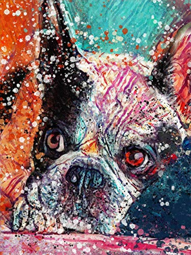 Boston Terrier Dog Wall Art Decor, Dog Memorial, Abstract Dog Picture Gift Choice of Sizes Hand Signed by Dog Portrait Artist Oscar Jetson. - Dog portraits by Oscar Jetson