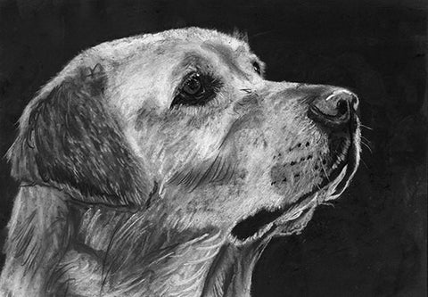 Yellow Lab owner gift,Labrador charcoal print,dog wall decor,dog loss gift, Labrador retriever,Yellow lab gift, lab wall hanging print. - Dog portraits by Oscar Jetson - 1