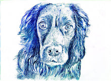 Load image into Gallery viewer, Cocker spaniel Dog drawing, print from original working Cocker drawing,dog picture, dog artork, English cocker, Working cocker spaniel Print - Dog portraits by Oscar Jetson