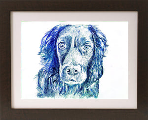 Cocker spaniel Dog drawing, print from original working Cocker drawing,dog picture, dog artork, English cocker, Working cocker spaniel Print - Dog portraits by Oscar Jetson