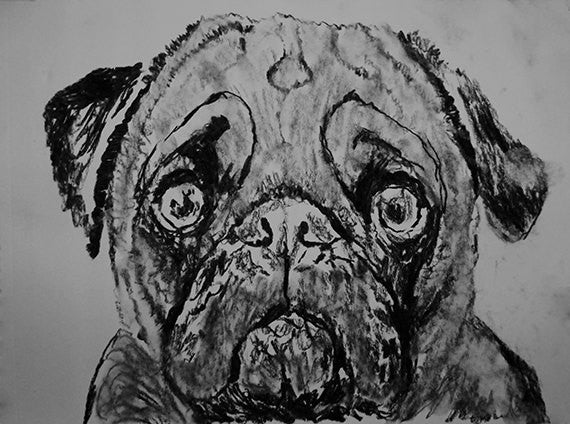 Pug dog art print, black and white, Pug dog,charcoal drawing, Pug dog portrait, wall art print, Black Pug dog art print - Dog portraits by Oscar Jetson