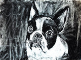 Boston terrier dog art print, black and white dog,charcoal drawing, boston terrier portrait wall art print home decor boston terrier print - Dog portraits by Oscar Jetson - 1