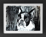 Boston terrier dog art print, black and white dog,charcoal drawing, boston terrier portrait wall art print home decor boston terrier print - Dog portraits by Oscar Jetson