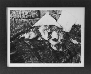 Border terrier drawing charcoal dog study border terrier dog art print - Dog portraits by Oscar Jetson