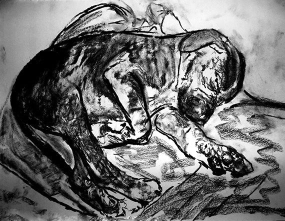 Boxer Dog Puppy art print, charcoal sleeping boxer pup drawing giclee print of Original dog portrait, boxer dog gift ,drawing boxer print - Dog portraits by Oscar Jetson